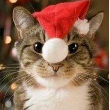 Fijne Kerstdagen en een Gelukkig Nieuwjaar! 26 Kerst Fijne Kerstdagen en een Gelukkig Nieuwjaar!