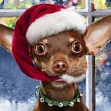 Fijne Kerstdagen en een Gelukkig Nieuwjaar! 14 Kerst Fijne Kerstdagen en een Gelukkig Nieuwjaar!