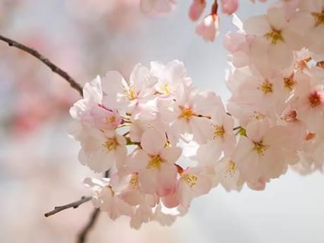 Oriflame viert het voorjaar! Nieuwe geuren voor hem en haar. 1 oriflame Oriflame viert het voorjaar! Nieuwe geuren voor hem en haar.