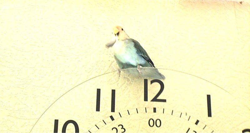 vriendje op klok