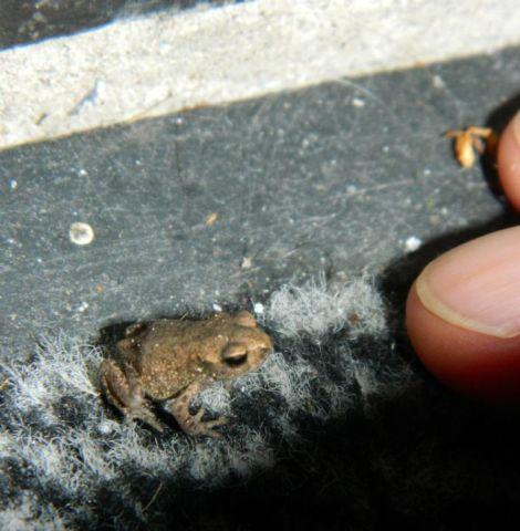 kleine kikker