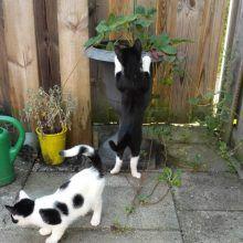 KeeK op de week 31- Koddige Kitten Kiekjes 74 kittens KeeK op de week 31- Koddige Kitten Kiekjes