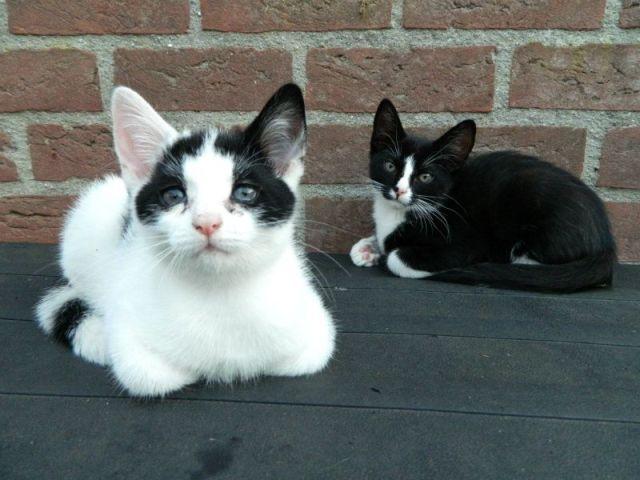 KeeK op de week 31- Koddige Kitten Kiekjes 9 kittens KeeK op de week 31- Koddige Kitten Kiekjes