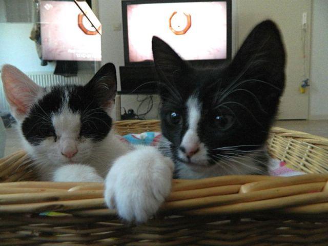 KeeK op de week 31- Koddige Kitten Kiekjes 11 kittens KeeK op de week 31- Koddige Kitten Kiekjes