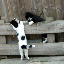 KeeK op de week 31- Koddige Kitten Kiekjes 52 kittens KeeK op de week 31- Koddige Kitten Kiekjes