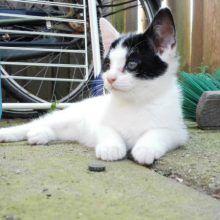KeeK op de week 31- Koddige Kitten Kiekjes 78 kittens KeeK op de week 31- Koddige Kitten Kiekjes