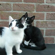 KeeK op de week 31- Koddige Kitten Kiekjes 50 kittens KeeK op de week 31- Koddige Kitten Kiekjes