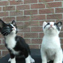 KeeK op de week 31- Koddige Kitten Kiekjes 48 kittens KeeK op de week 31- Koddige Kitten Kiekjes