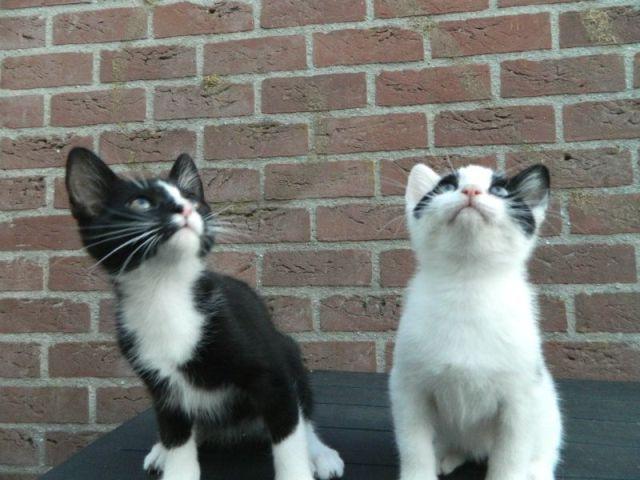 KeeK op de week 31- Koddige Kitten Kiekjes 13 kittens KeeK op de week 31- Koddige Kitten Kiekjes
