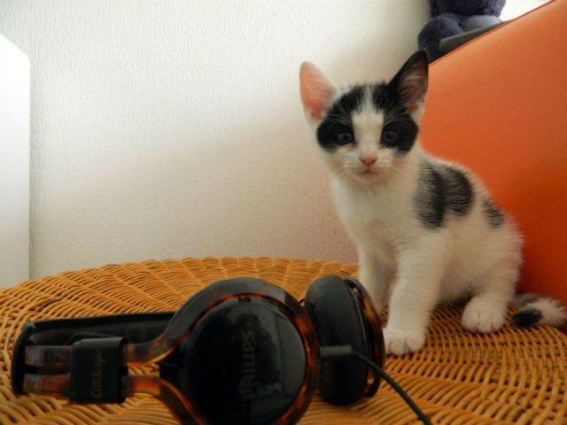 marie koptelefoon