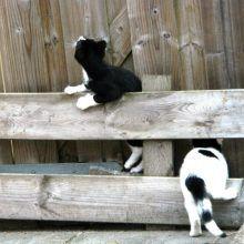 KeeK op de week 31- Koddige Kitten Kiekjes 54 kittens KeeK op de week 31- Koddige Kitten Kiekjes