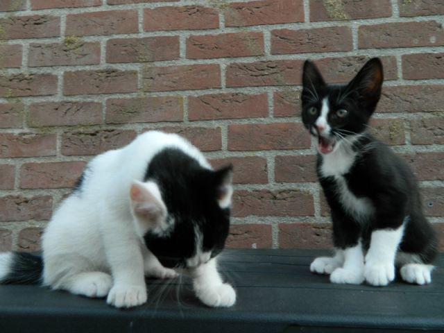 KeeK op de week 31- Koddige Kitten Kiekjes 23 kittens KeeK op de week 31- Koddige Kitten Kiekjes