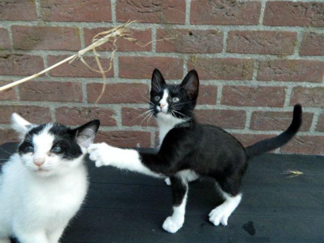 KeeK op de week 31- Koddige Kitten Kiekjes 7 kittens KeeK op de week 31- Koddige Kitten Kiekjes