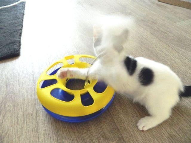 KeeK op de week 31- Koddige Kitten Kiekjes 21 kittens KeeK op de week 31- Koddige Kitten Kiekjes