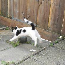 KeeK op de week 31- Koddige Kitten Kiekjes 76 kittens KeeK op de week 31- Koddige Kitten Kiekjes