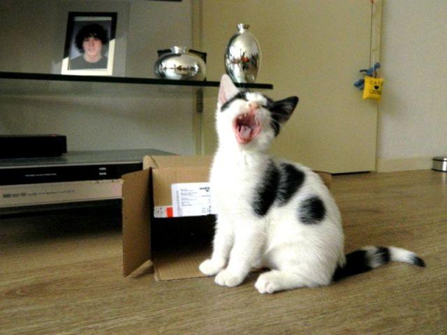 Wraaaa, ik ben een gevaarlijke tijger! Of is ze aan het zingen?