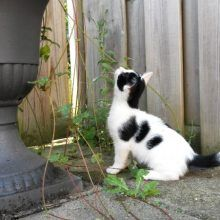 KeeK op de week 31- Koddige Kitten Kiekjes 72 kittens KeeK op de week 31- Koddige Kitten Kiekjes