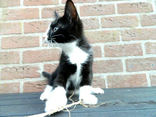 KeeK op de week 31- Koddige Kitten Kiekjes 31 kittens KeeK op de week 31- Koddige Kitten Kiekjes