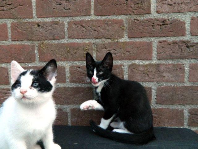 KeeK op de week 31- Koddige Kitten Kiekjes 25 kittens KeeK op de week 31- Koddige Kitten Kiekjes