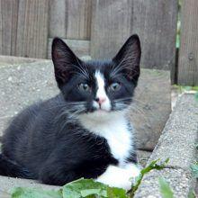 KeeK op de week 31- Koddige Kitten Kiekjes 40 kittens KeeK op de week 31- Koddige Kitten Kiekjes