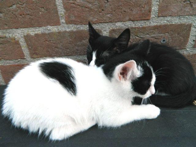 KeeK op de week 31- Koddige Kitten Kiekjes 33 kittens KeeK op de week 31- Koddige Kitten Kiekjes