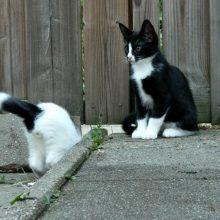 KeeK op de week 31- Koddige Kitten Kiekjes 38 kittens KeeK op de week 31- Koddige Kitten Kiekjes