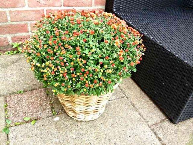 plant tuin