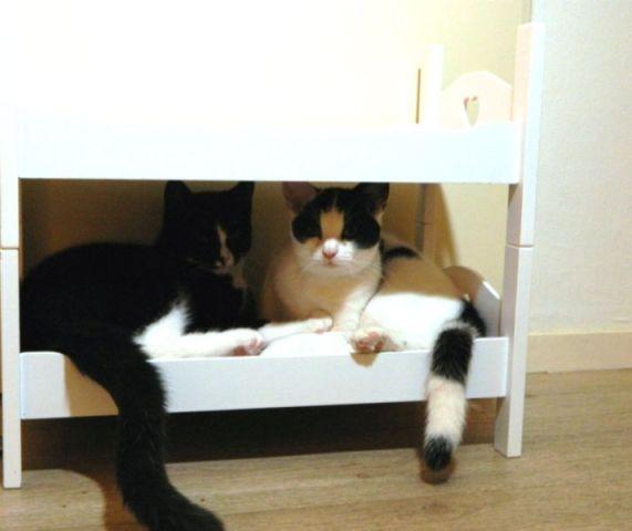 meneer-en-mevrouw-cats-in-bed