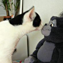 Marie en Toulouse zijn jarig! Lekker foto's kijken! 45 kittens Marie en Toulouse zijn jarig! Lekker foto's kijken!