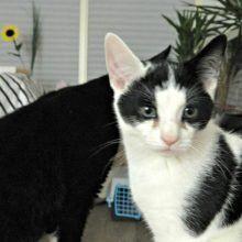 Marie en Toulouse zijn jarig! Lekker foto's kijken! 43 kittens Marie en Toulouse zijn jarig! Lekker foto's kijken!