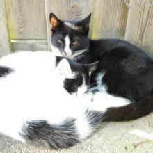 Marie en Toulouse zijn jarig! Lekker foto's kijken! 55 kittens Marie en Toulouse zijn jarig! Lekker foto's kijken!