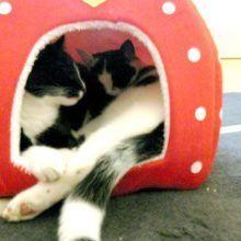 Marie en Toulouse zijn jarig! Lekker foto's kijken! 51 kittens Marie en Toulouse zijn jarig! Lekker foto's kijken!