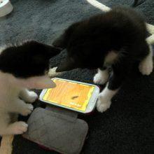 Marie en Toulouse zijn jarig! Lekker foto's kijken! 19 kittens Marie en Toulouse zijn jarig! Lekker foto's kijken!