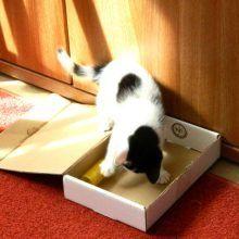 Marie en Toulouse zijn jarig! Lekker foto's kijken! 17 kittens Marie en Toulouse zijn jarig! Lekker foto's kijken!