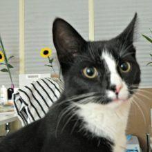 Marie en Toulouse zijn jarig! Lekker foto's kijken! 49 kittens Marie en Toulouse zijn jarig! Lekker foto's kijken!