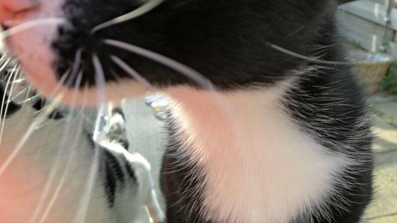 toulouse doet photobomb