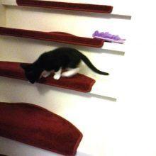 Marie en Toulouse zijn jarig! Lekker foto's kijken! 23 kittens Marie en Toulouse zijn jarig! Lekker foto's kijken!