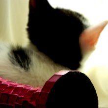 Marie en Toulouse zijn jarig! Lekker foto's kijken! 27 kittens Marie en Toulouse zijn jarig! Lekker foto's kijken!