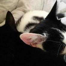 Hoera! Marie en Toulouse zijn vandaag 2 jaar geworden! 115 jarig Hoera! Marie en Toulouse zijn vandaag 2 jaar geworden!
