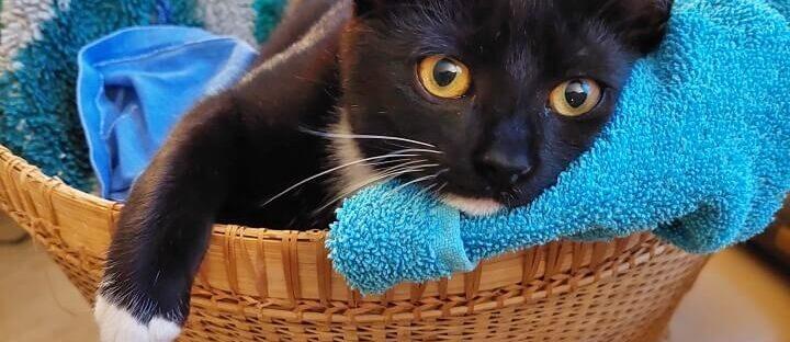 Wij hebben een Kitten erbij! Mag ik aan jullie voorstellen.... 7 kitten Wij hebben een Kitten erbij! Mag ik aan jullie voorstellen....